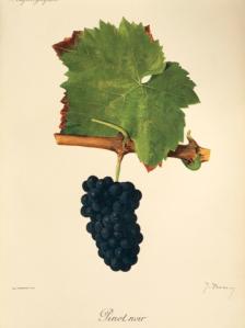 Pinot Viala